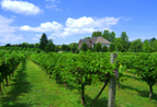 Valentino Vineyard and Winery in Long Grove, IL at Restaurant.com